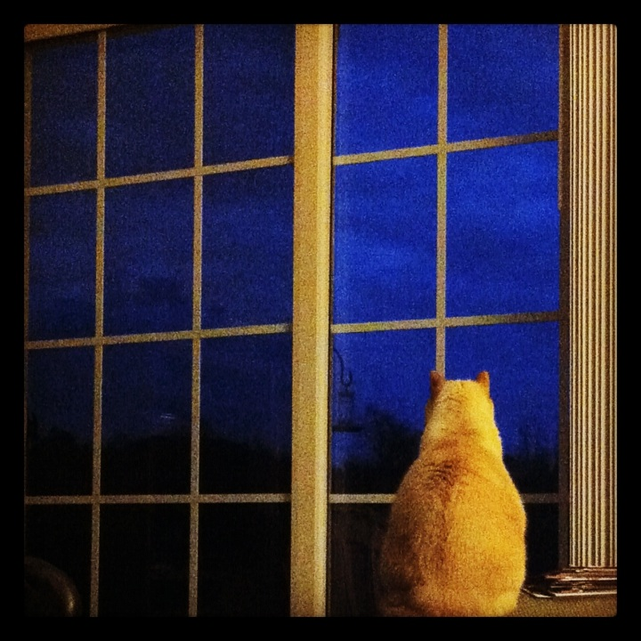 Wordless Wednesday: Watchcat